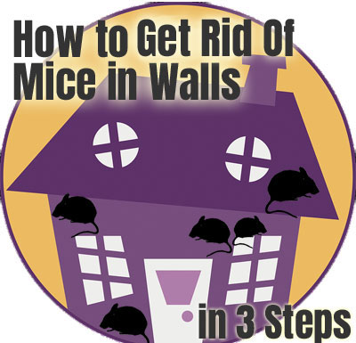 How to Get Rid of Mice in the Walls
