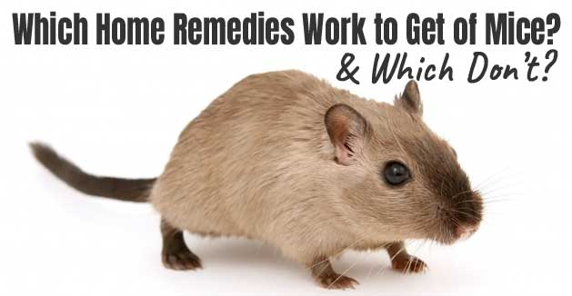 Household Items to Get Rid of Mice - Which Ones Work?