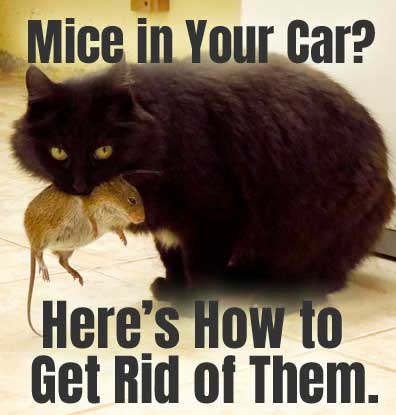 How to Keep Mice Out of Your Car
